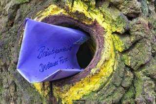 """ماشيين بالعكس"""".. شجرة بلوط تجمع بين الباحثين عن الحب فى ألمانيا"""