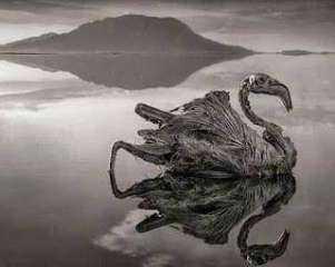 حكايات أغرب من الخيال حدثت بالفعل .. بحيرة قاتلة تحول من يقترب منها لقطعة حجر !
