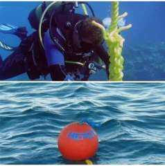 1200 شمندورة للحفاظ علي الشعاب المرجانية بالبحر الأحمر